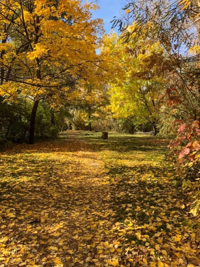 Boise Fall