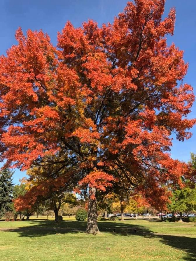 Boise Tree