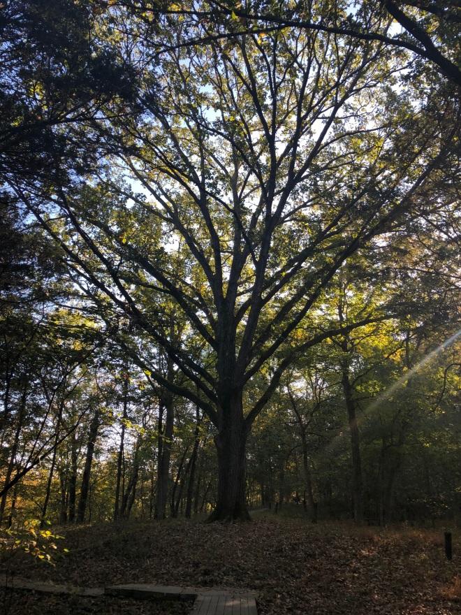 Parklands Tree
