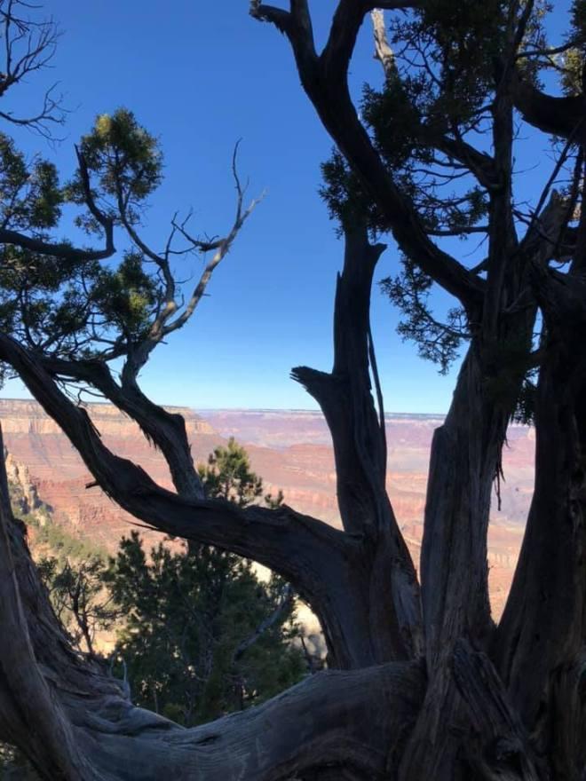 GC In Tree