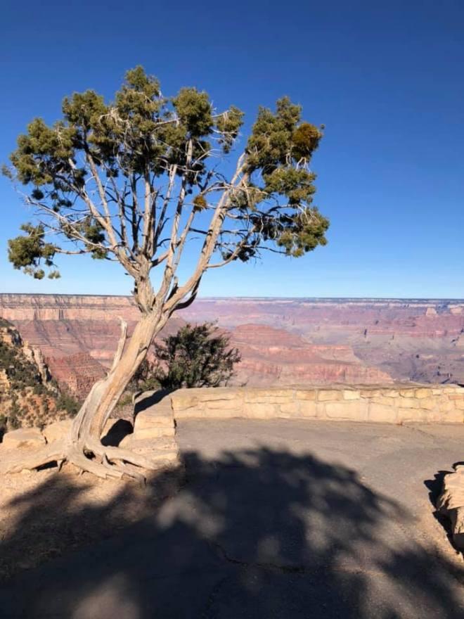 GC Tree